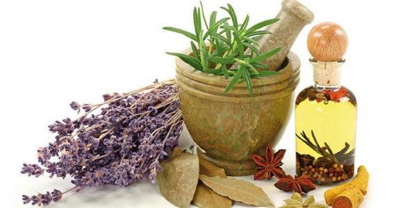 Plantes_aromatiques_et_medicinales-740x521