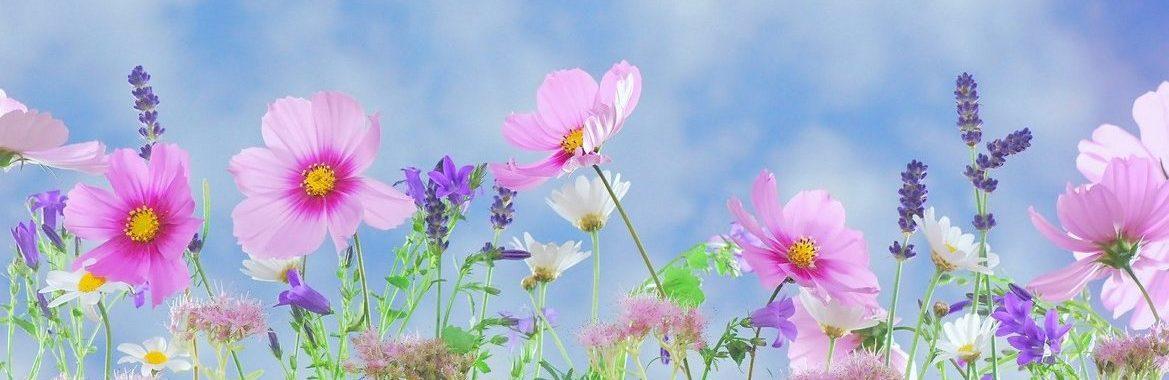 wild-flowers-571940_19201